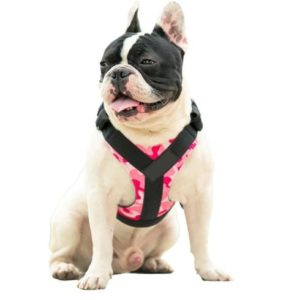 professional french bulldog harness